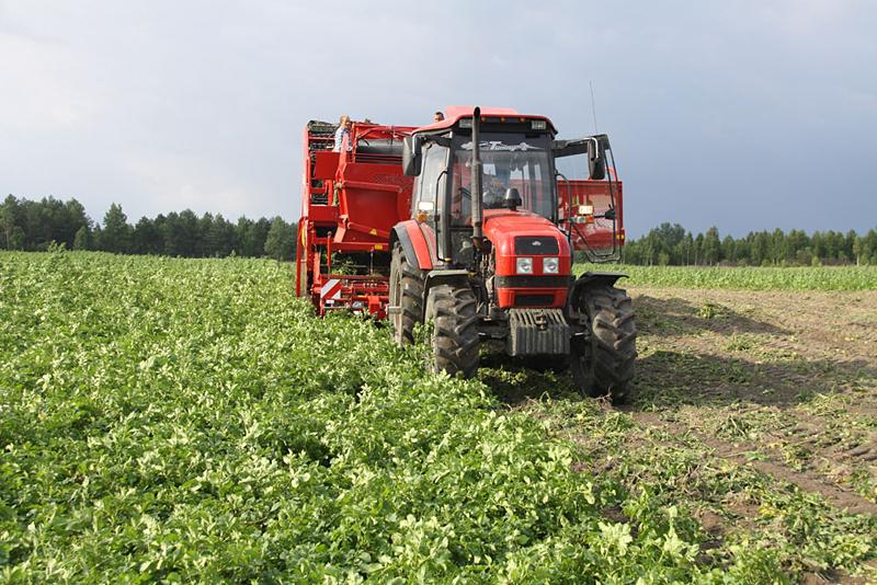 Тверские аграрии увеличили сбор картофеля на 30%